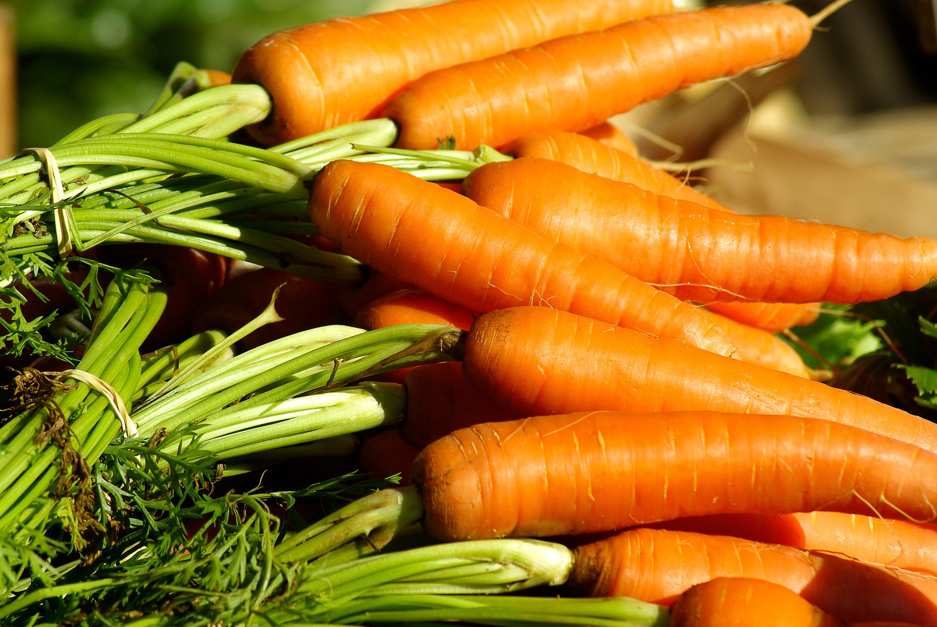 The Nutritional Needs of Carrots